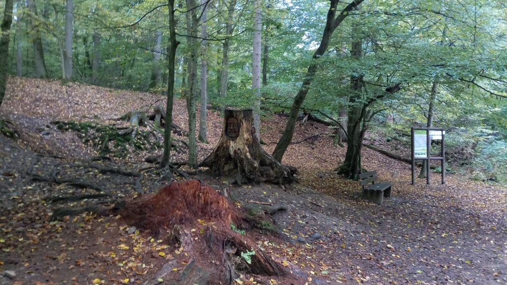 Eine Nacht im Wald – Interview mit Papa Langsam